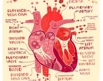 Tu cerebro enamorado: póster de anatomía por Rachelignotofsky
