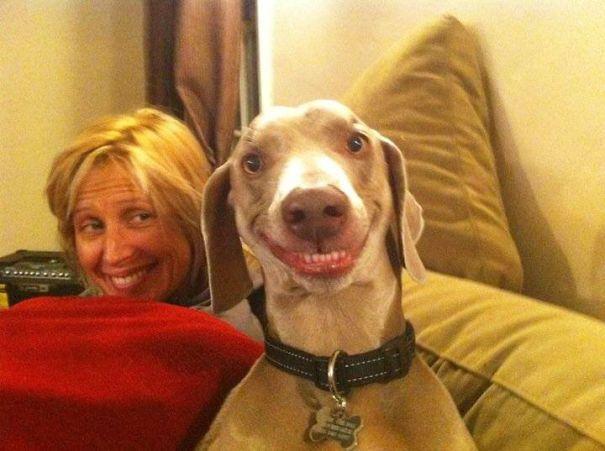 Фото: Смешные до невозможности: веселые и изобретательные животные
