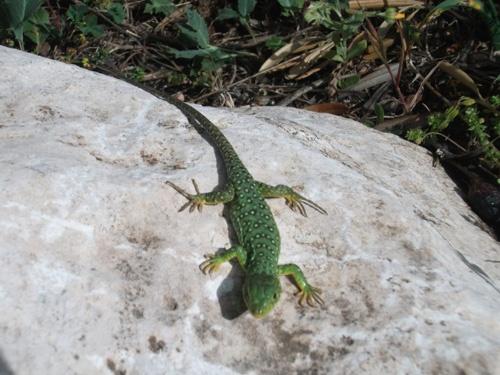 Biodiversidad - Biodiversity
