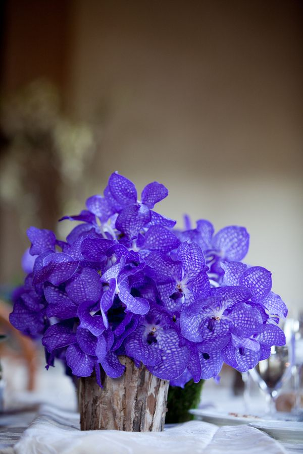violet vineyard wedding  |  roberto falck photography