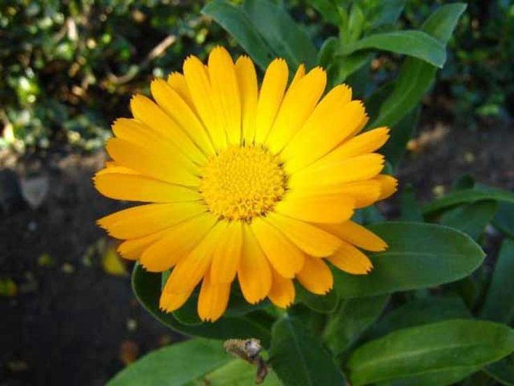 Las 25 mejores ideas sobre plantas para sol en pinterest y - Plantas terraza mucho sol ...