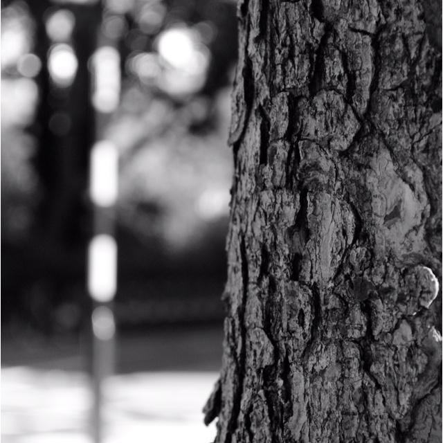Tree bark, London
