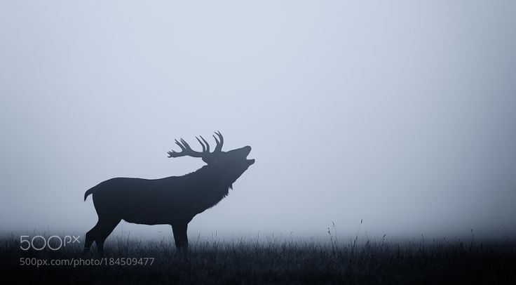 Stag Night by bridgephotography