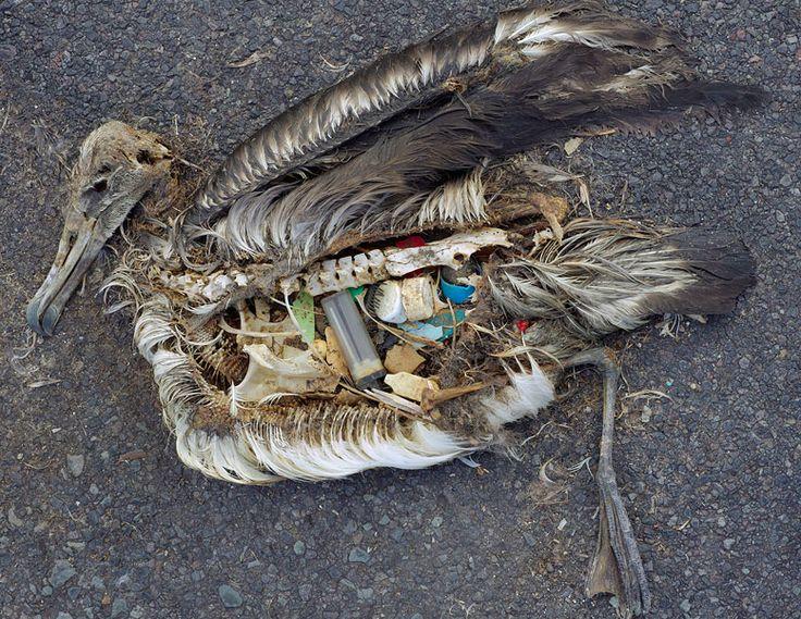 Hunderttausende Meeressäuger, Vögel und Fische sterben jedes Jahr durch die Verseuchung der Ozeane durch Plastikmüll.   Vermeidet Plastiktüten wann immer es Euch möglich ist. Nutzt diese Tüten mehrfach. Aus Einkaufstaschen lassen sich immer noch mal als Mülltüten verwenden.