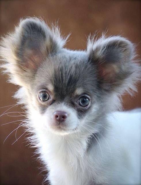 what a cutie!