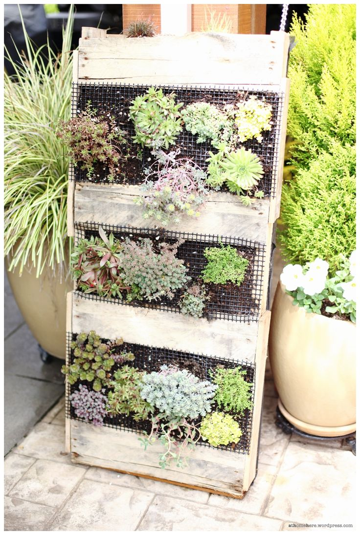 8 best images about pallet garden on pinterest pallet for Indoor succulent wall