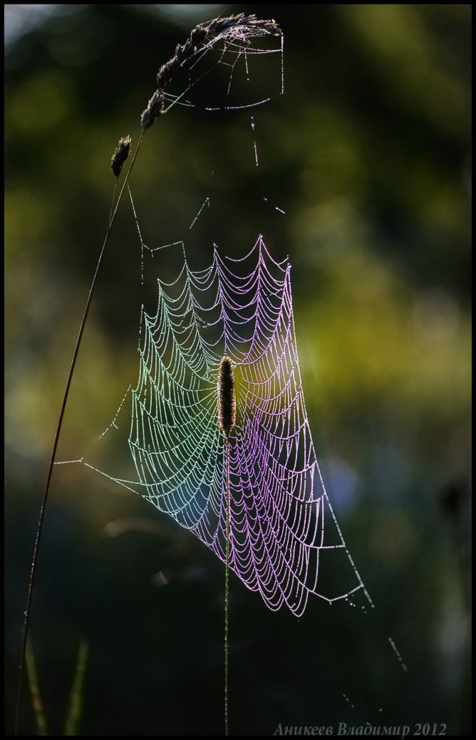 Radiant web...ummm where is the spider?