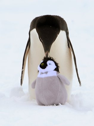 penguins are my favorite animal Winter time is a perfect time to introduce children to the animals that like the cold weather our favorite animals are penguins so, while all my children would enjoy these activities, i wanted to do some for my son's level who is three.