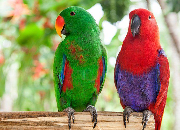 Sesc Itaquera oferece caminhada para observação de aves