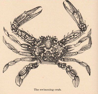 Victorian Graphic - Crab - The Graphics Fairy