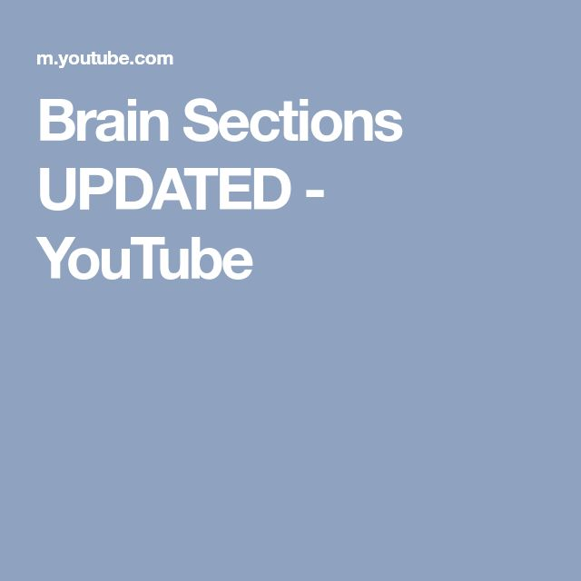 Brain Sections UPDATED - YouTube