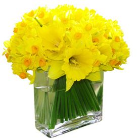 Daffodil centerpieces?  We could make a box out of chalkboards to put around the vase.