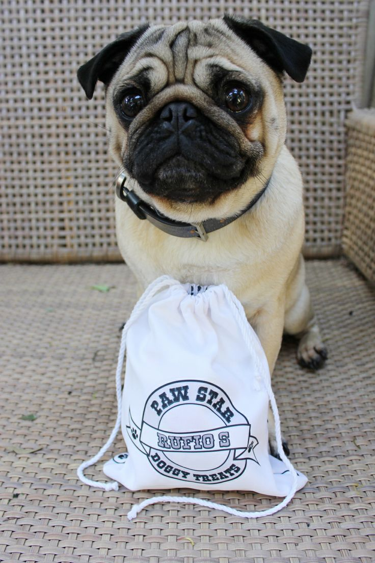 Rufio the Pug with his personalised treat bag hand made in Australia from idpet.com.au