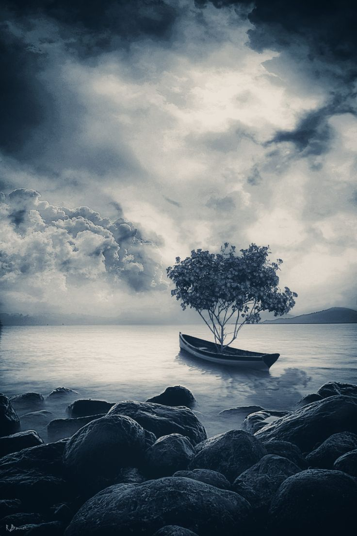 FineArtSeen - View Migratory Tree by Romain Bonnet. A limited edition black and white photograph art print. Browse more art for sale at great prices. New art added daily. Buy original art direct from international artists. Shop now