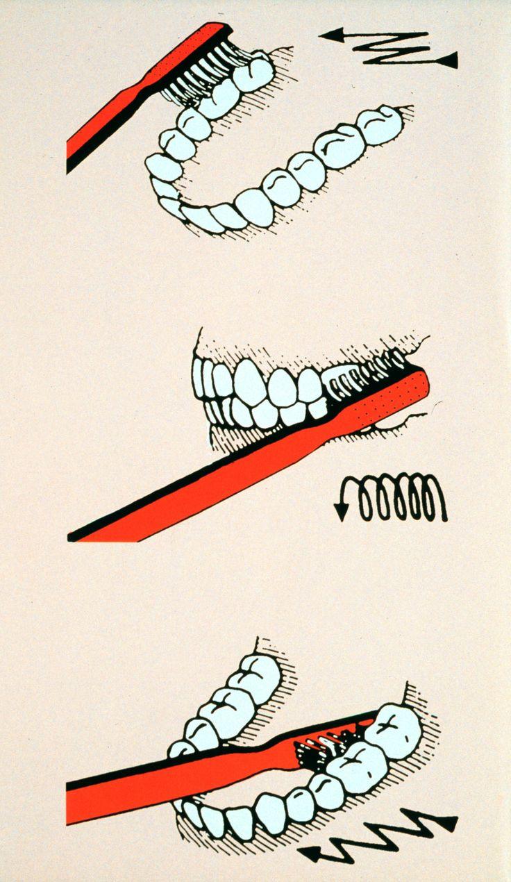 http://www.elffers.com/press/openhere/tooth.jpg