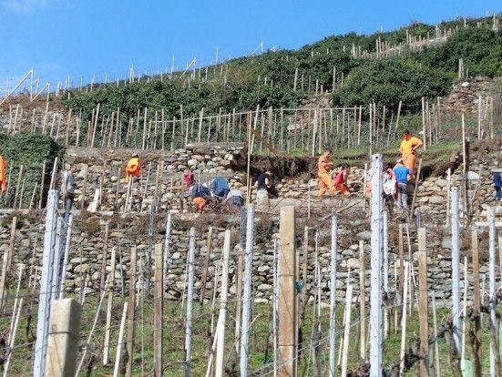 Sciur è decisamente improntato alla sostenibilità a 360 gradi, dalla gestione del vigneto all'utilizzo dell'acqua, dal packaging al rispetto del territorio. Come la preservazione dei muri a secco, tipici della Valtellina e da salvare.