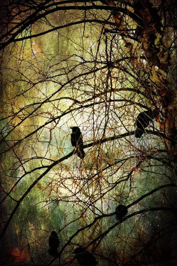 Crows are said in European and Native American folklore to be messengers from our loved ones on the other side. To see one is to know you are watched over...