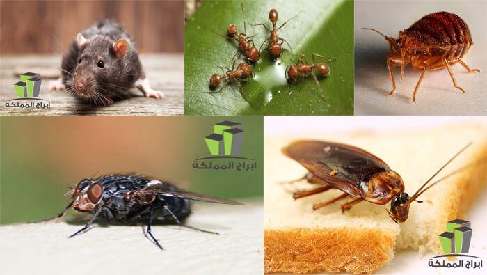 انواع الحشرات الزاحفة المنزلية واشكالها بالصور وطرق القضاء عليها Insects Animals