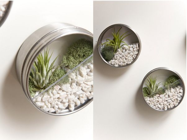 Create magnetic wall terrariums.