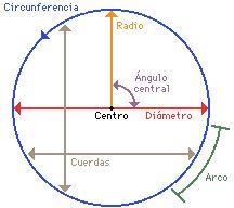Centro, radio, diametro, cuerda, arco, ángulo central.
