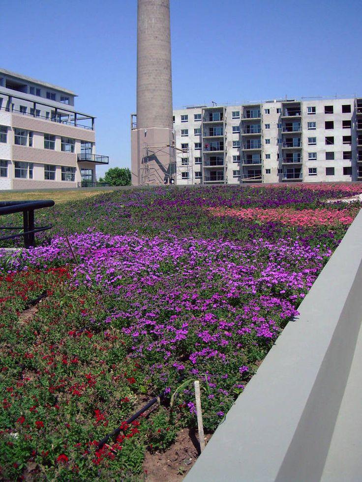 9 pasos para crear una terraza verde