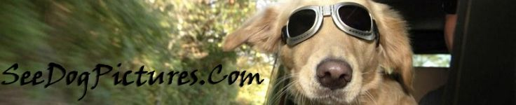 Cute Male and Female Dog Names with Meaning, now you will know what the name of your puppy means. #Dog #Names #Cute #Puppy #Meanings