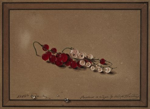 Count Fyodor Petrovich Tolstoy (1783 – 1873) Berries of red and white currants 1818 Brown paper, gouache 17.4 x 23.8 (drawing delineated) Tretyakov Gallery, Moscow