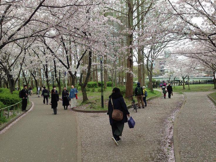 そっちでいんですか自分が 本当に行きたい 場所はもう一つの道かもしれません... 事情があってちょっと日本に帰国しておりまっす さて僕たちは学ぶ心さえあれば日常のどんな場面からでも人生の教訓を得ることが出来る訳ですが今回もそれについてです 日常でもちょくちょく見るこの 右の道か左の道かという二択の道路の道 この前の方が右に行っているからということであなたも右に行きますか 常識とはそのほとんどその国限定その地域エリア限定であることが多く 世界の常識生命の常識というような大きな枠組みでの常識でないことがほとんどです そのため日本人も東南アジアなど海外に行くと通常の10倍のタクシー運賃を払わされたりスリにあうことがよくある訳です 例えば深夜にホテルに到着したらウェルカムドリンクを渡され 何ここのホテルめちゃめちゃサービスええやん と思い一杯ごくりっ そして夜も遅かったので爆睡... お風呂も入らず ばくすい です 後はカンタンです 1時間くらいして部屋に入りサイフからお金を取って 以上終了 お客は朝急いでいるから直ぐには気づかれない…