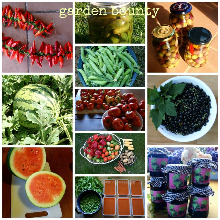 Some of what my garden produced last summer