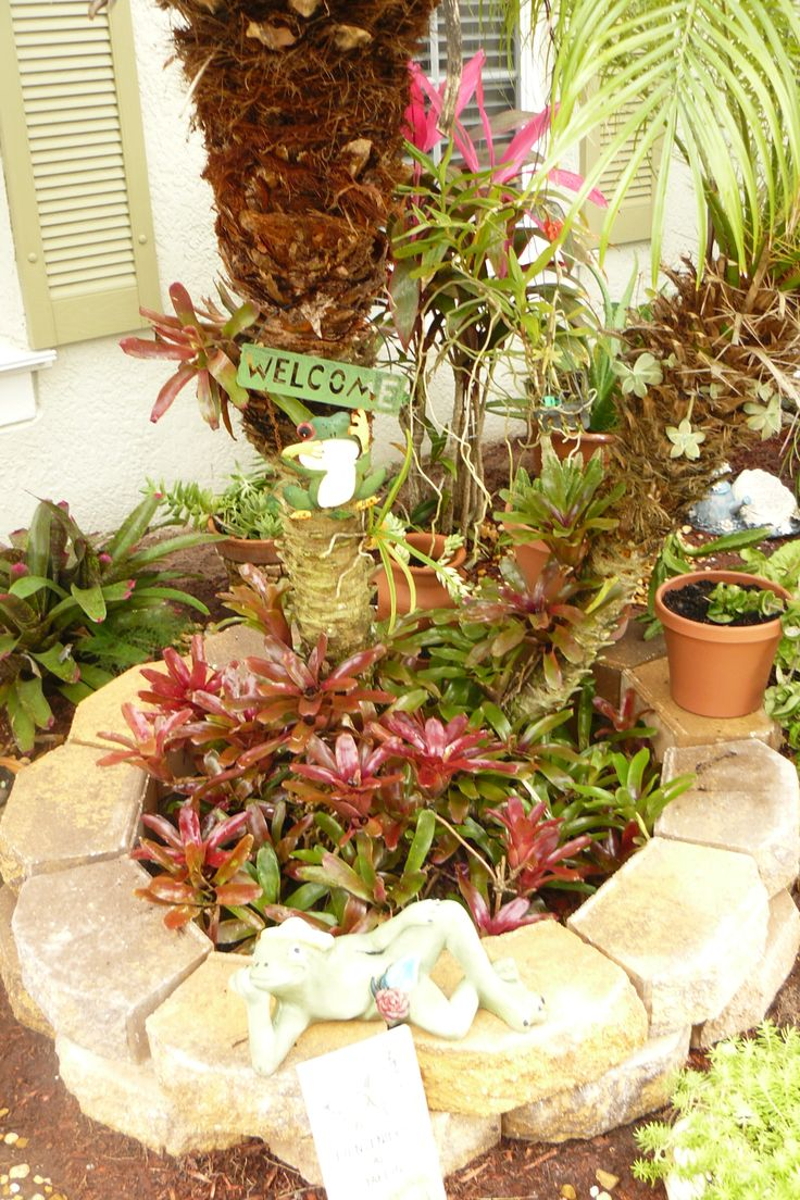 I bought these pavers and put them around my palm tree...this is a BROMELIAD  garden