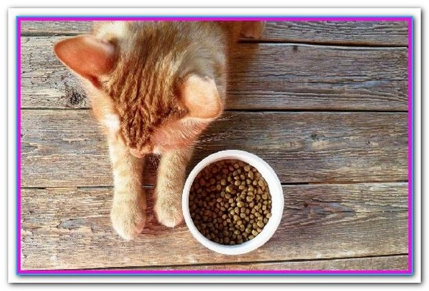 Best Dry Dog Foods 2018 What S The Best Dog Food A List Of The