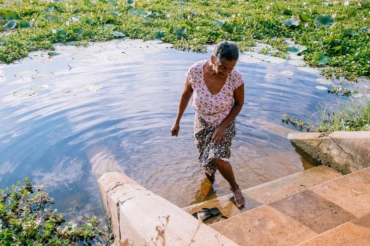 Día Mundial de los Humedales 2016: Laguna Sri Lanka, los humedales se encuentran entre los ambientes más productivos del mundo, proporcionando una gama de beneficios subestimados para el sustento y el bienestar de las personas. Malika Wijethunga, de 65 años, se detiene junto al lago para lavarse los pies después de terminar sus tareas matutinas alrededor de la casa. Su casa se encuentra justo frente al lago Anawilundawa. Malika explica que muchas personas vienen a este lugar en el lago para…