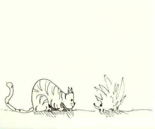 Cat vs Hedgehog