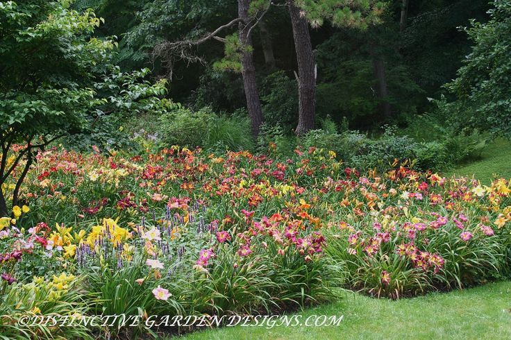 Daylilies Jewels In The Garden 10 Handpicked Ideas To