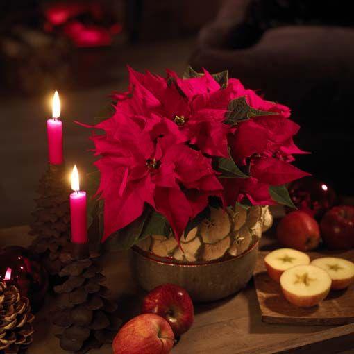 Блог о Греции - Александрино - цветочная Рождественская традиция