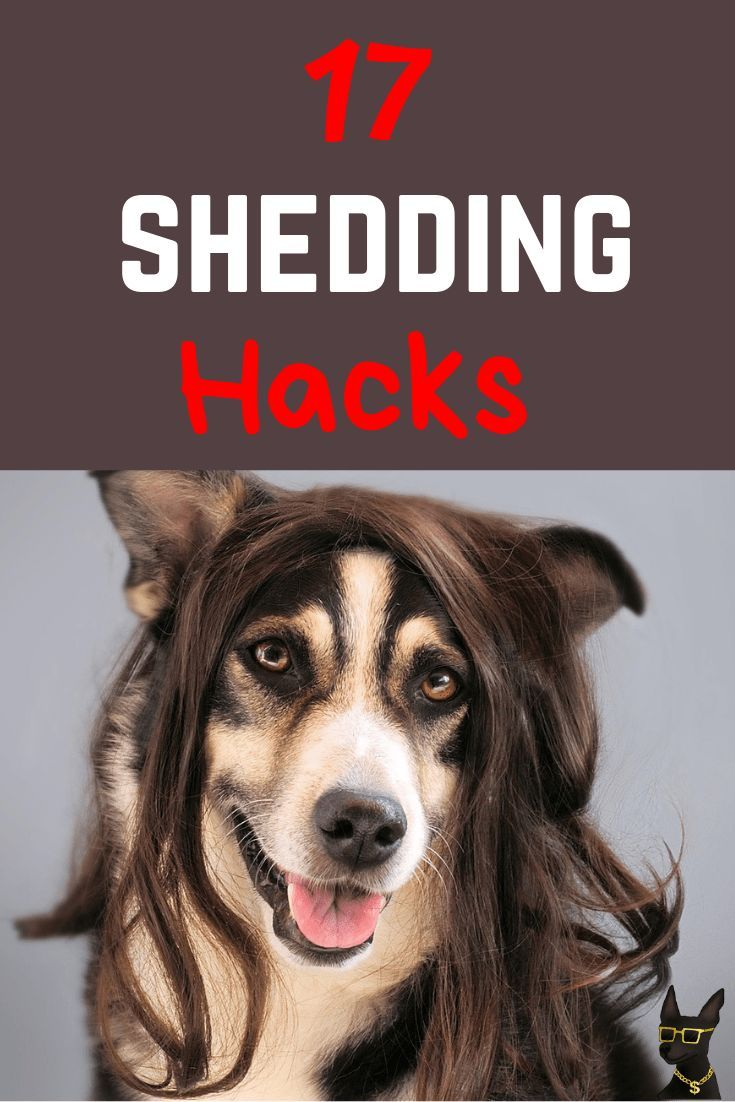 Make Your Dog Shed Less Cuz Its Super Annoying Dog Shedding Remedies Dog Shedding Deshedding Dog