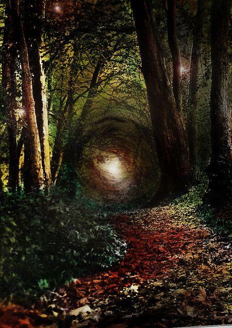 ✯ Enchanted Forest, RobIreland - Ireland