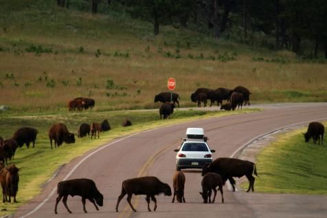 Black Hills of South Dakota : 10 Most Popular Road Trip Routes in the US : TravelChannel.com