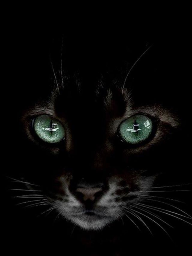 Pin By Ruzena Maser On Cat Special Black Cat Anime Black Cat Pictures Beautiful Cats