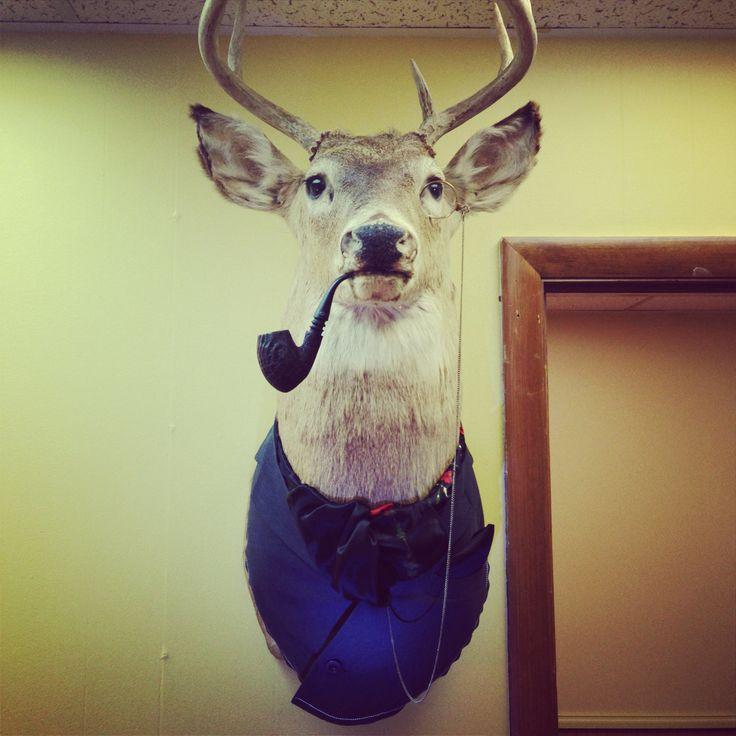 Deer mount project done!!!!