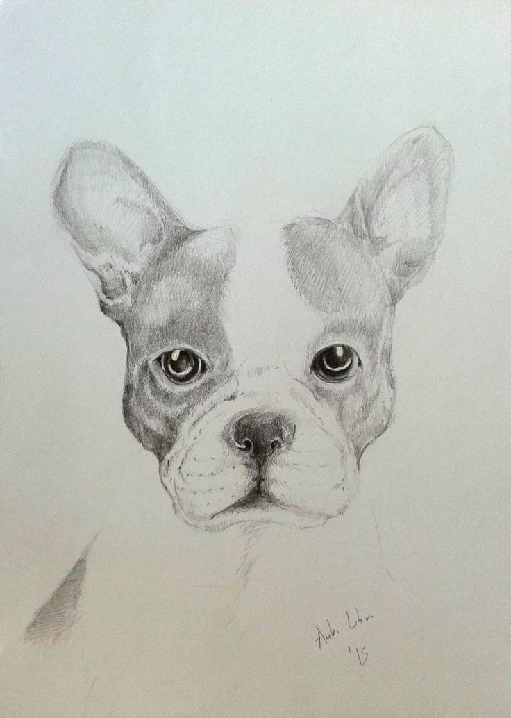 Drawing Pencil French Bulldog