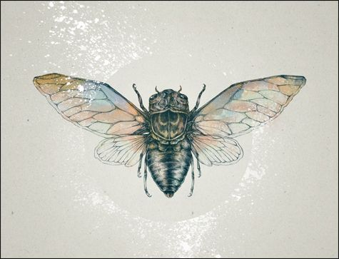 cicada illustration (modified from tattoo design).