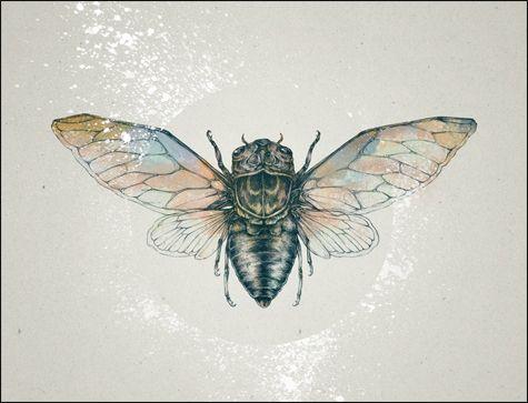 cicada illustration (modified from tattoo design). ink, digital (photoshop). 2010.