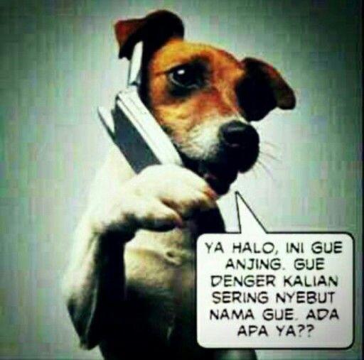 Halo, anjing…