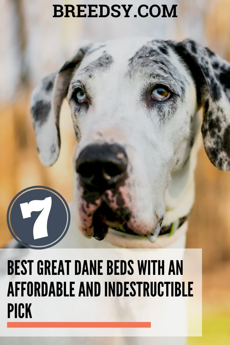 7 Best Great Dane Beds With Our Affordable And Indestructible Pick Great Dane Bed Great Dane Puppy Great Dane