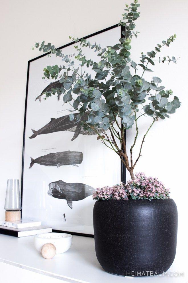 == Mit Tipps für Eukalyptus drinnen ==