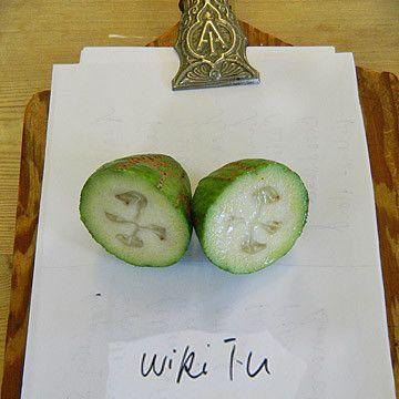 Feijoa Wiki Tu