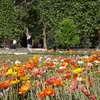 Flowerbed at Jardin des Plantes, Paris
