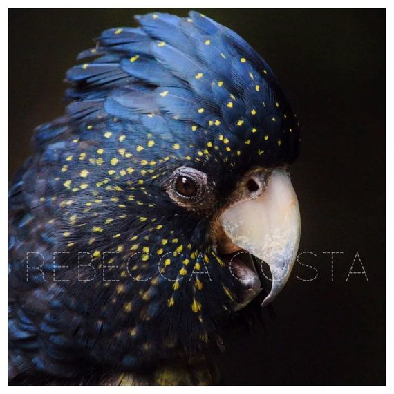 Australian photo bird photo original photography by giftdesigns