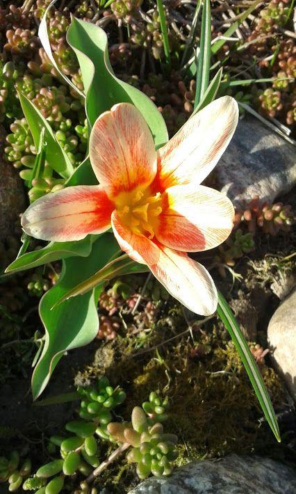 flor azul jardim secreto : flor azul jardim secreto:Mais de 1000 imagens sobre Flores no Pinterest